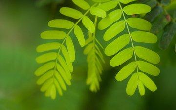 листья, макро, растение, william warby