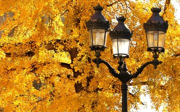 tree, leaves, macro, autumn, lantern