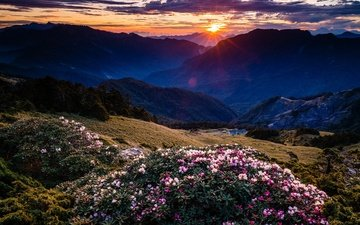 the sky, flowers, clouds, mountains, the sun, hills, nature, flowering, sunset, rays, landscape, fog, the bushes, slope, rhododendrons
