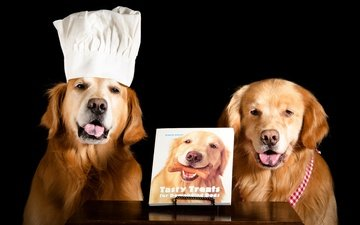 face, black background, language, book, dogs, cap, cook, golden retriever