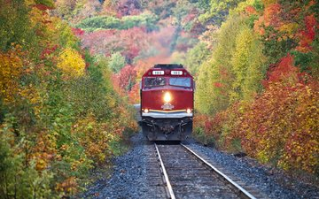 trees, railroad, forest, autumn, train