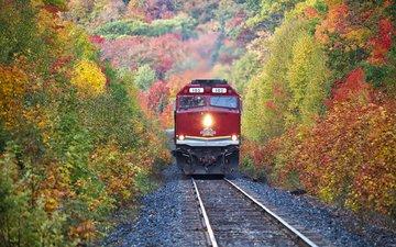 деревья, железная дорога, лес, осень, поезд