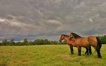 небо, лошадь, трава, деревья, природа, тучи, поле, кусты, лето, лошади, кони, пасмурно