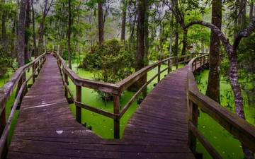 nature, the bridge, forest, swamp, path, south carolina, the swamp, hilton head
