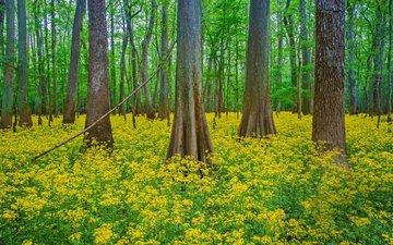 flowers, trees, nature, forest, trunks, south carolina, national park congaree