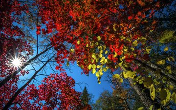 the sky, trees, nature, forest, leaves, autumn, vitaly berkov