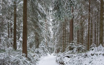 trees, river, snow, nature, forest, winter, trunks, path, guido de kleijn