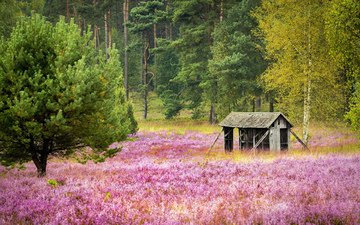 flowers, trees, nature, forest, field, house, the barn, dirk weber