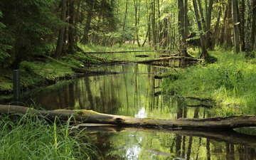 трава, деревья, река, природа, лес, стволы, джунгли, ст