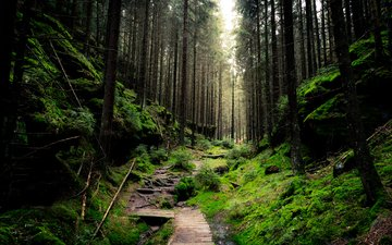 trees, nature, forest, branches, trunks, path, moss, sven wloch