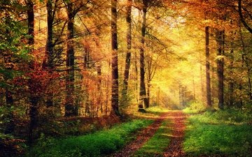 road, trees, nature, forest, autumn, the sun's rays