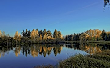 the sky, trees, river, nature, forest, reflection, landscape, diego lapetina