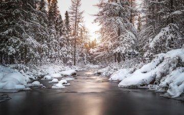trees, river, snow, nature, forest, winter