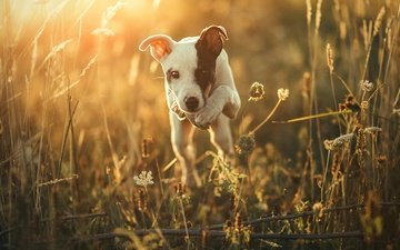 light, nature, morning, muzzle, look, dog, puppy, each