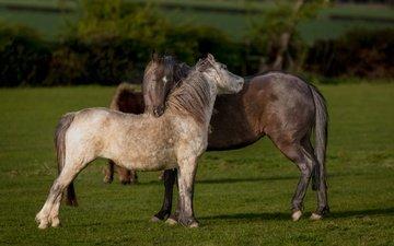 трава, природа, поле, лето, любовь, лошади, кони, пастбище