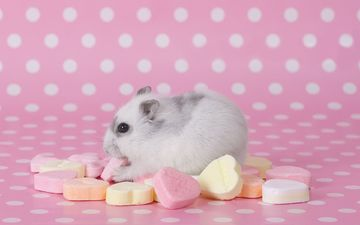hamster, mouse, candy, rodent
