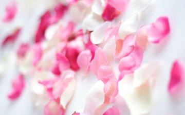 цветы, лепестки