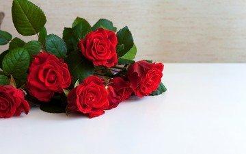 цветы, розы, красные