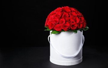 flowers, roses, bouquet, box, red roses