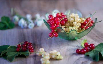 berries, leaves, delicious, currants, ripe, twigs
