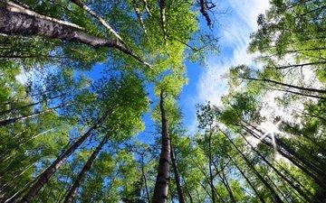 trees, nature, leaves, park, branches, summer, alaska