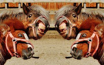 лошади, пони, домашние животные