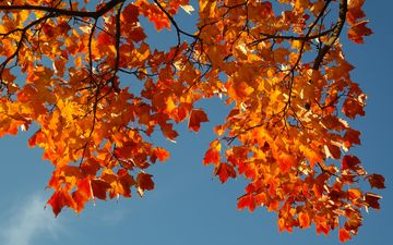 the sky, branch, leaves, autumn