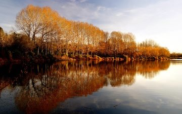 trees, water, lake, nature, reflection, landscape, autumn, pond, new zealand