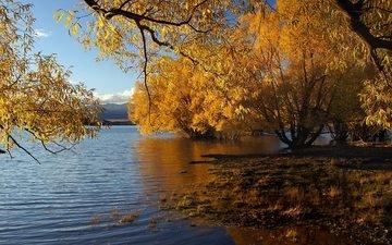 trees, water, nature, leaves, landscape, autumn, new zealand, lake tekapo