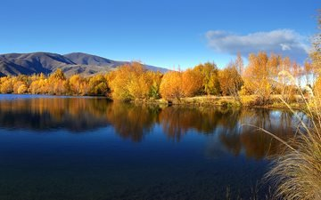 the sky, water, lake, autumn, willow