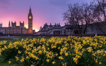 flowers, sunset, london, building, big ben, parliament