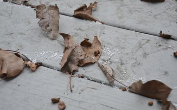 nature, leaves, autumn, board, dry