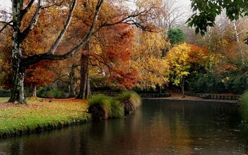 trees, river, nature, leaves, park, autumn, garden, pond, plant