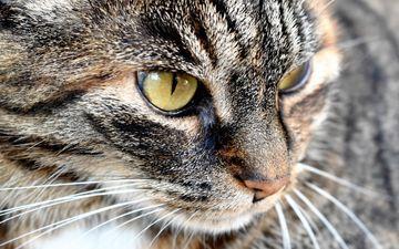 глаза, кот, мордочка, усы, кошка