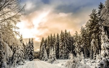 clouds, trees, snow, forest, winter