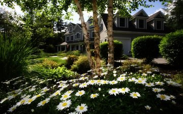 flowers, grass, trees, garden, house, chamomile, lawn, cottage