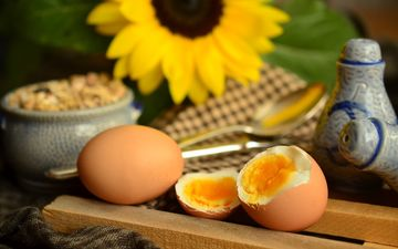 цветок, подсолнух, яйца, желток