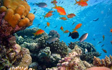 sea, fish, corals, underwater world