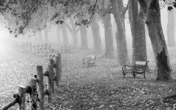trees, nature, leaves, landscape, fog, autumn, black and white, benches, fence