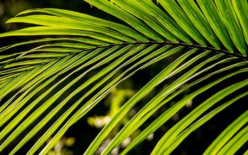 nature, leaves, green, palma