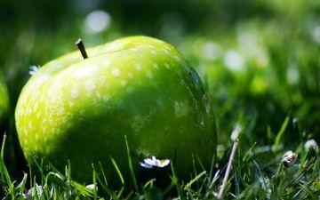 трава, природа, фрукты, яблоко, растение, лужайка, зеленое яблоко