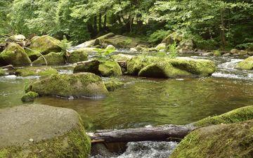 trees, water, river, stones, forest, stream, vegetation