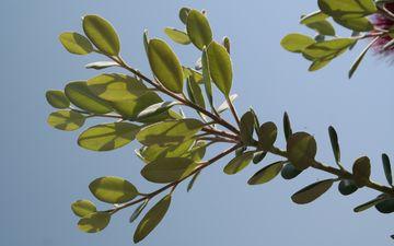 ветка, дерево, листья, зеленые