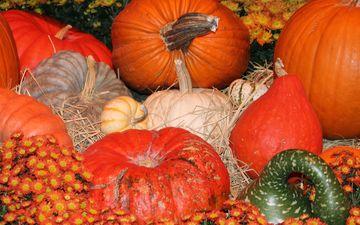 осень, урожай, овощи, тыквы, тыква