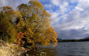 the sky, clouds, lake, river, nature, tree, landscape, autumn, plant, new zealand