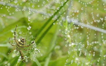 grass, nature, greens, insect, rosa, drops, plant, macro, spider, web, closeup, :grass