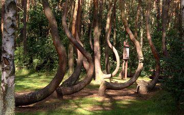 trees, nature, park, trunks, poland, vegetation, krzywy las
