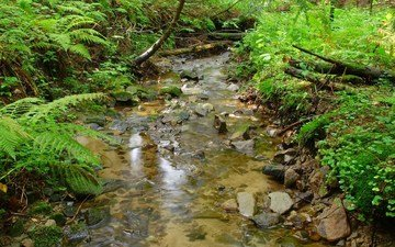 grass, trees, water, stones, greens, landscape, stream, branches, the bushes, fern