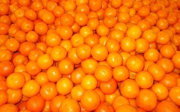 фрукты, мандарины, цитрусы