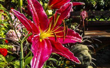 flowering, flower, petals, stamens, lily, macro